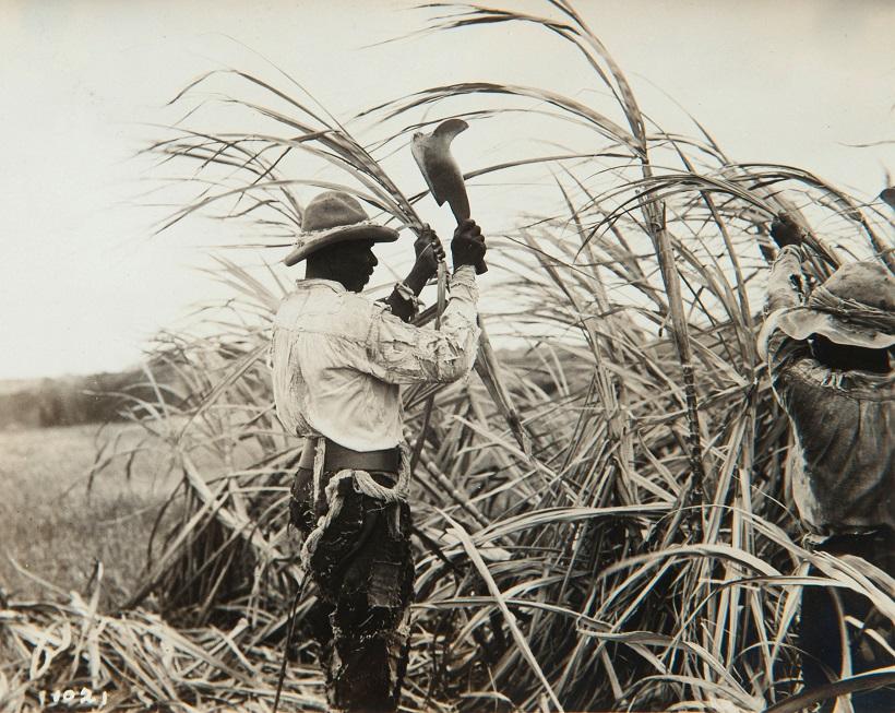 Collectie Nationaal Museum van Wereldculturen TM 60062019 Suikerrietoogst Barbados fotograaf niet bekend