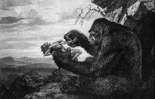 Amor de mono / mono de amor