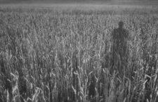 Ponerse a salvo en el trigo