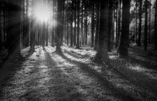 La edad de los árboles