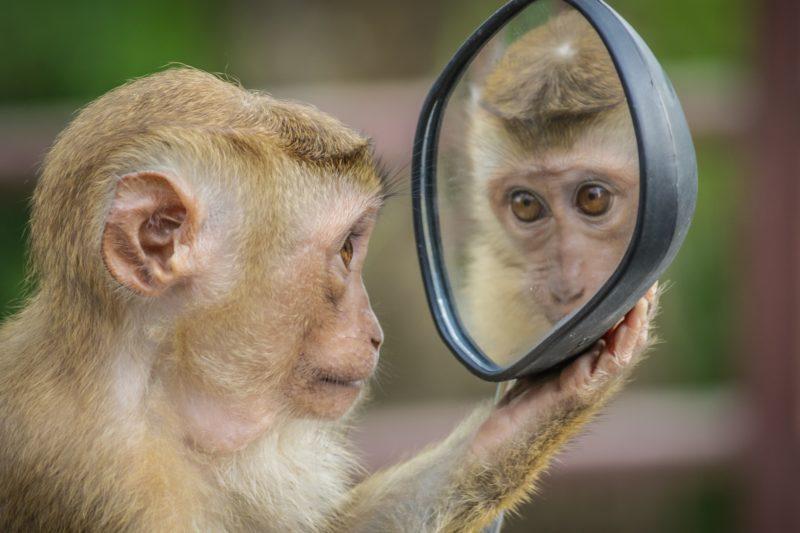 monkey 3512996 1920