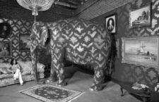 El virus y el elefante