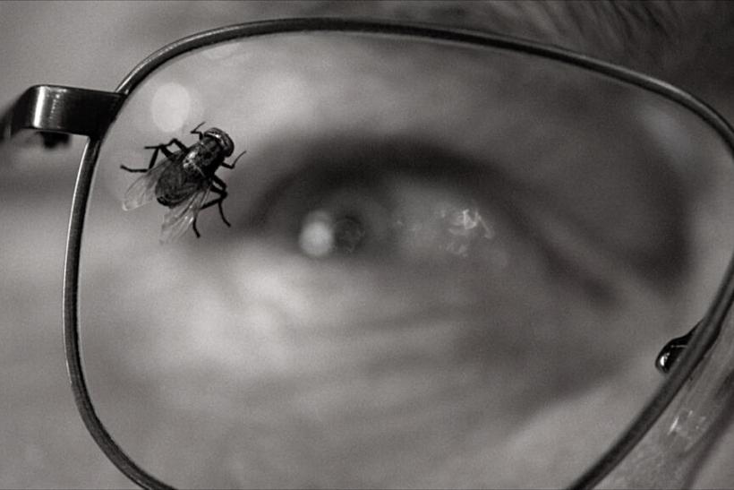 El tiempo de las moscas