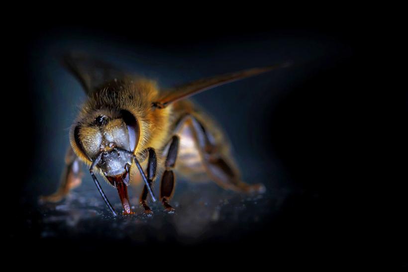 bee abeja miel