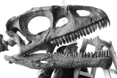 Un paleontólogo inspecciona la réplica de un Lessemsaurus sauropoides, 2010. Fotografía: Getty.