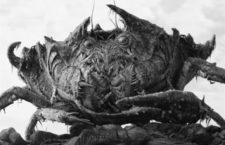 La gran superficie es un cangrejo gigante