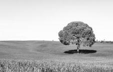 Azar, duda, desamparo o creatividad: dimensión colectiva de la incertidumbre (y II)